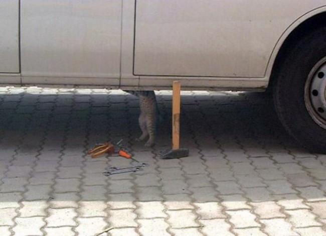 gatos_escondidos_14