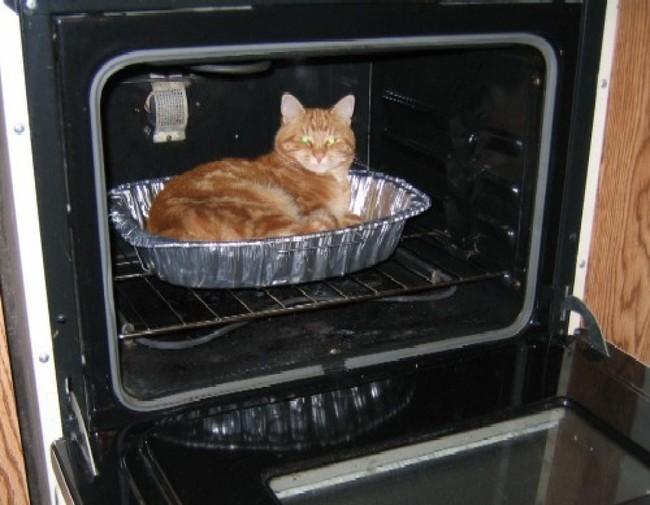 gatos_escondidos_15