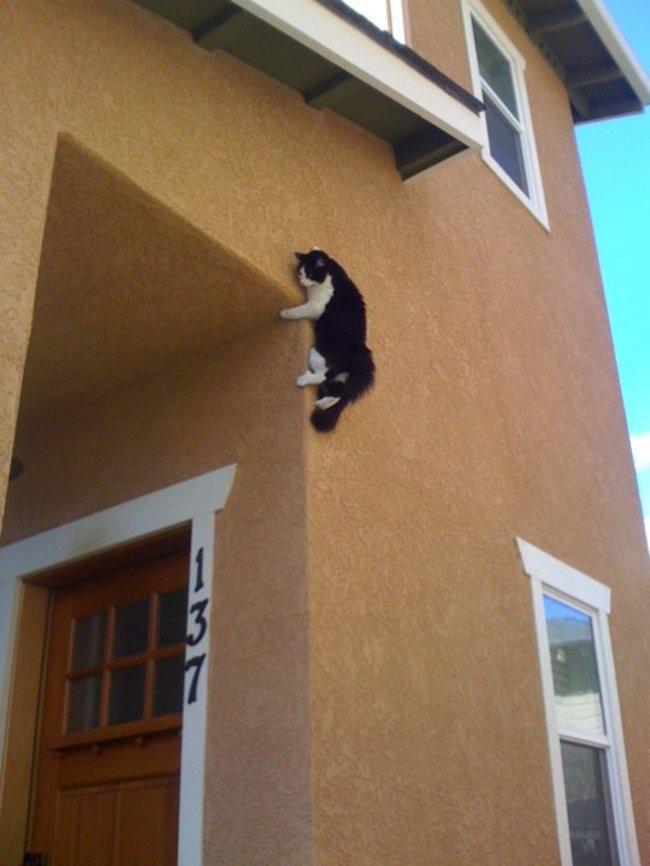 gatos_escondidos_16