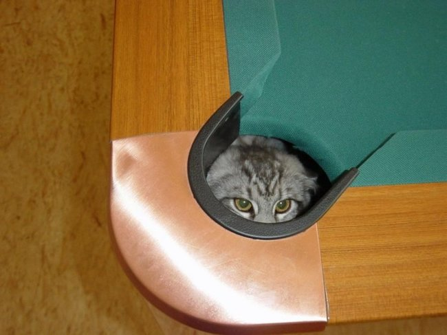 gatos_escondidos_17