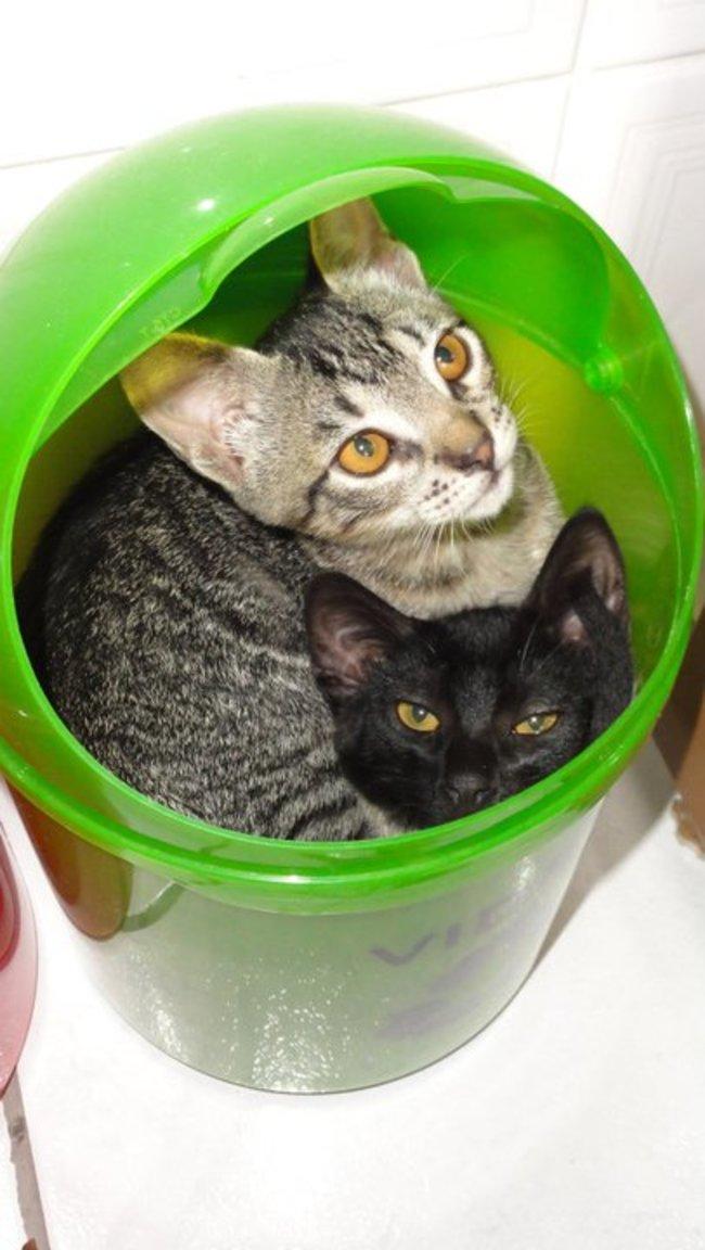 gatos_escondidos_19