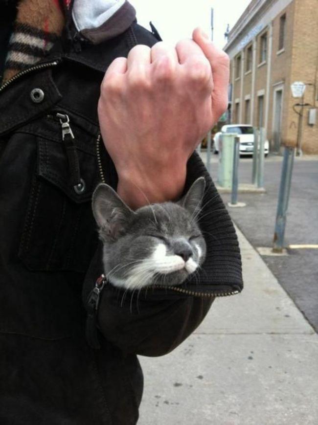 gatos_escondidos_20
