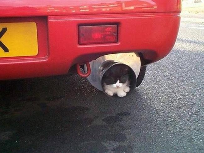 gatos_escondidos_21