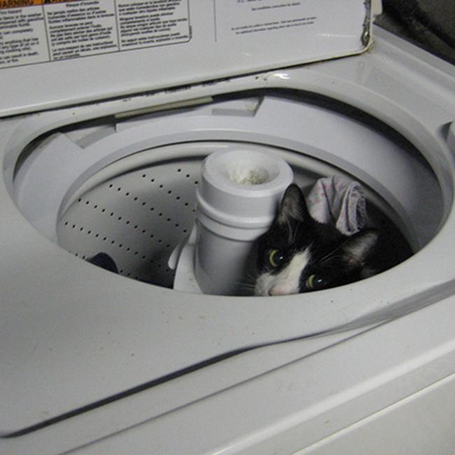 gatos_escondidos_23