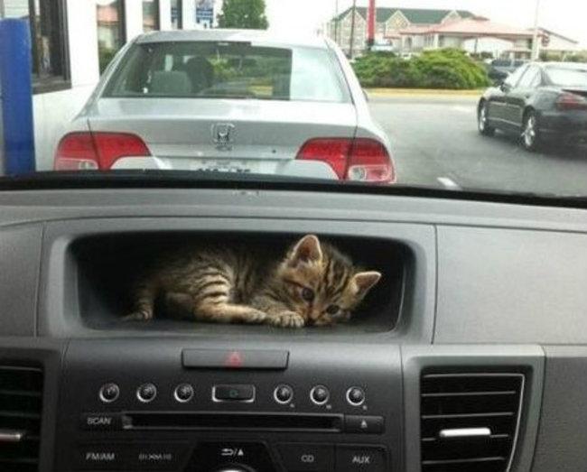gatos_escondidos_25