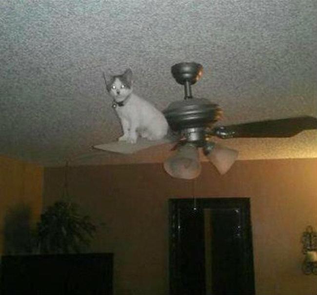gatos_escondidos_26