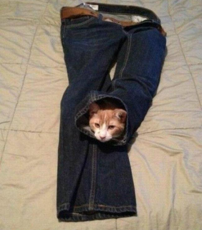 gatos_escondidos_27