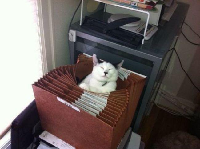 gatos_escondidos_3