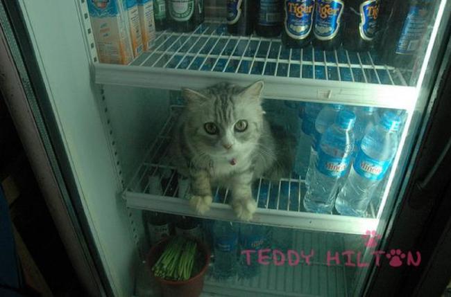 gatos_escondidos_5