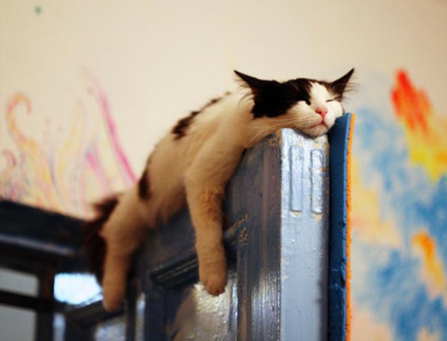 gatos_escondidos_8