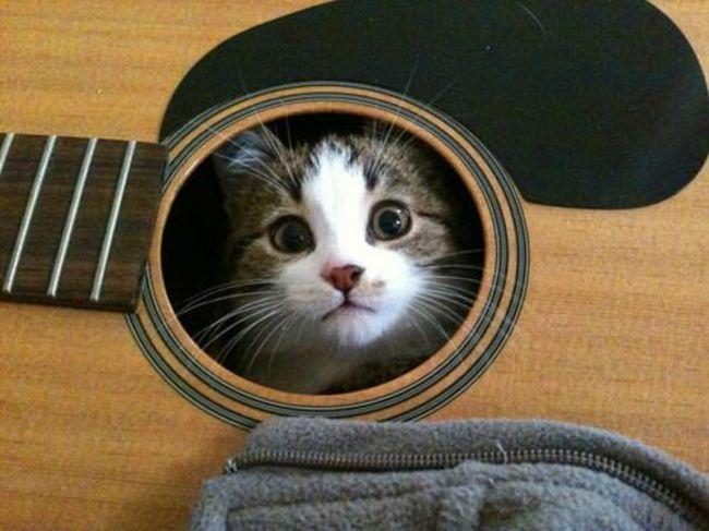 gatos_escondidos_9