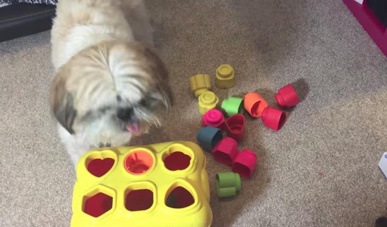 inteligencia-perro