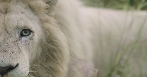 leon-blanco