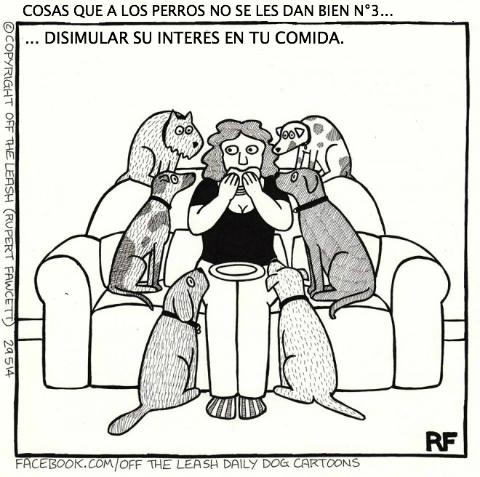 logica de perros 12