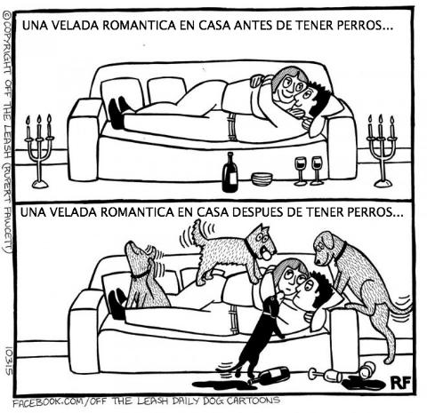 logica de perros 13