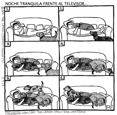 logica de perros 14