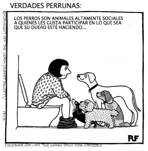 logica de perros 15