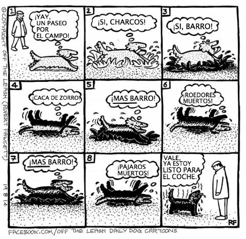 logica de perros 16