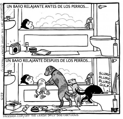 logica de perros 4