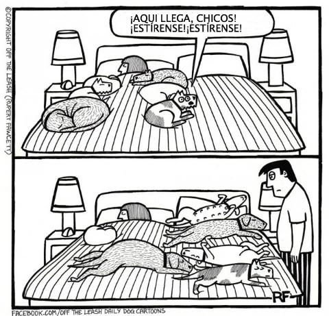logica de perros 8