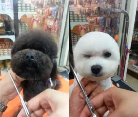peluqueria perros 2