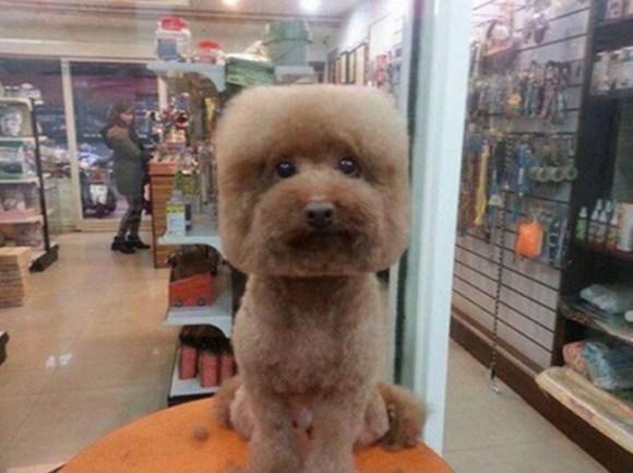 peluqueria perros 3