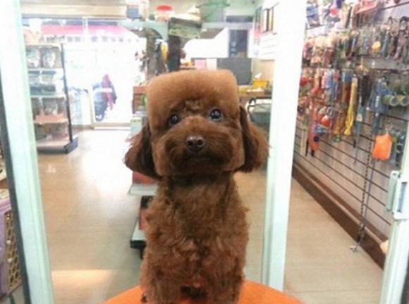 peluqueria perros 5