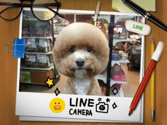 peluqueria perros 6