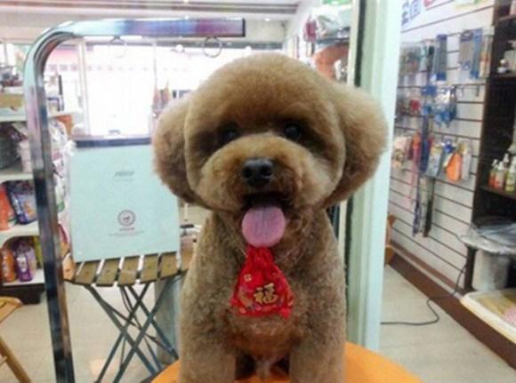 peluqueria perros 7