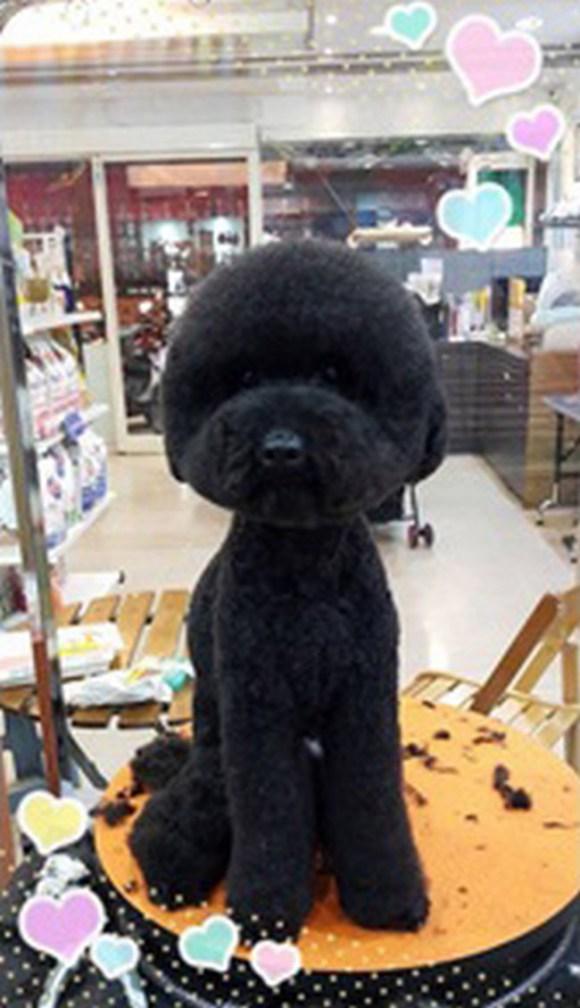 peluqueria perros 8