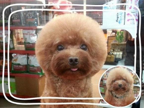 peluqueria perros 9
