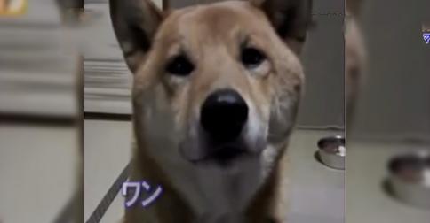 perro-ladridos