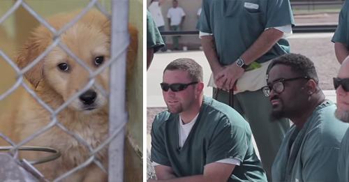 perro-prision