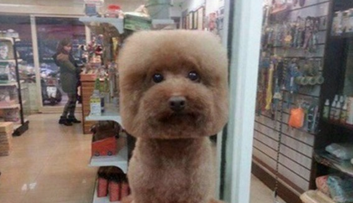 perros-cabeza-cuadrada