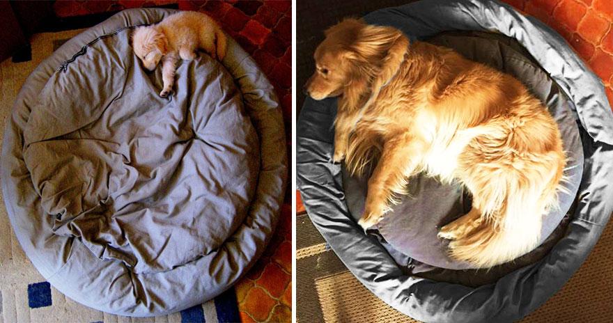 perros_antes_y_despues_2