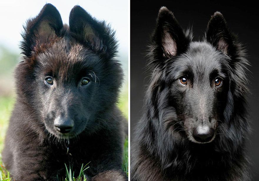 perros_antes_y_despues_23