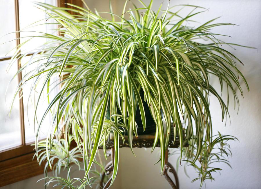 plantas_casas_2