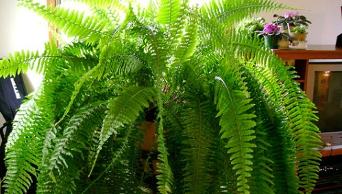 plantas_casas_6