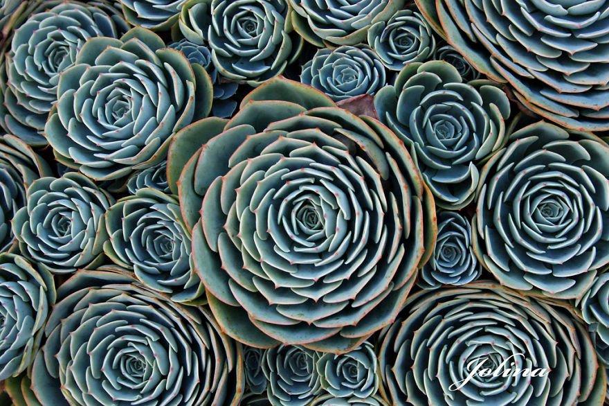 plantas_geometricas_18
