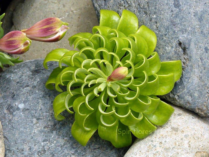plantas_geometricas_22