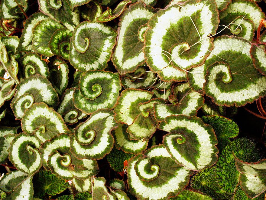 plantas_geometricas_24