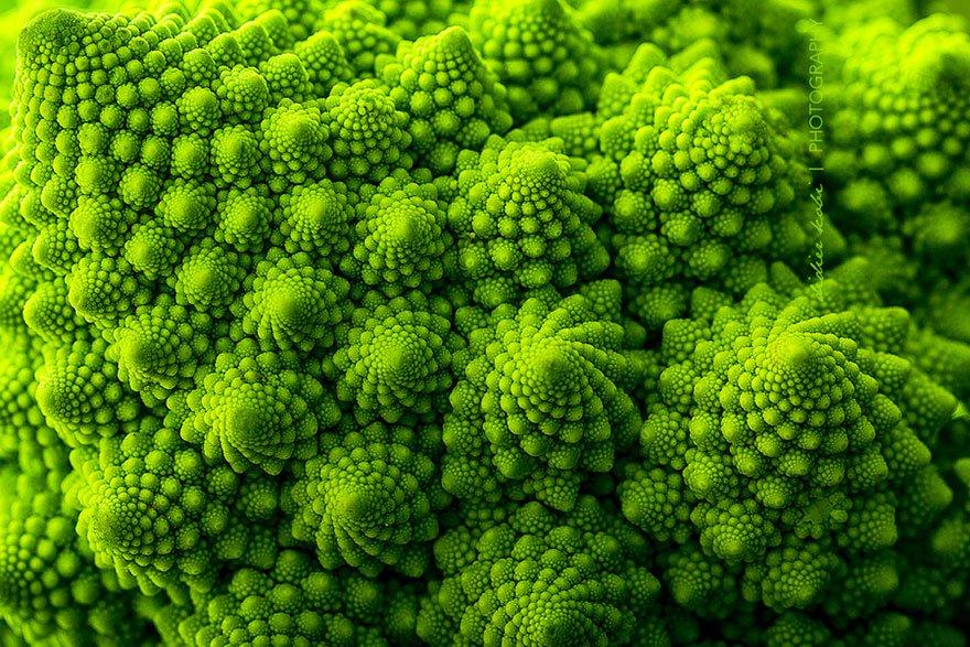 plantas_geometricas_3