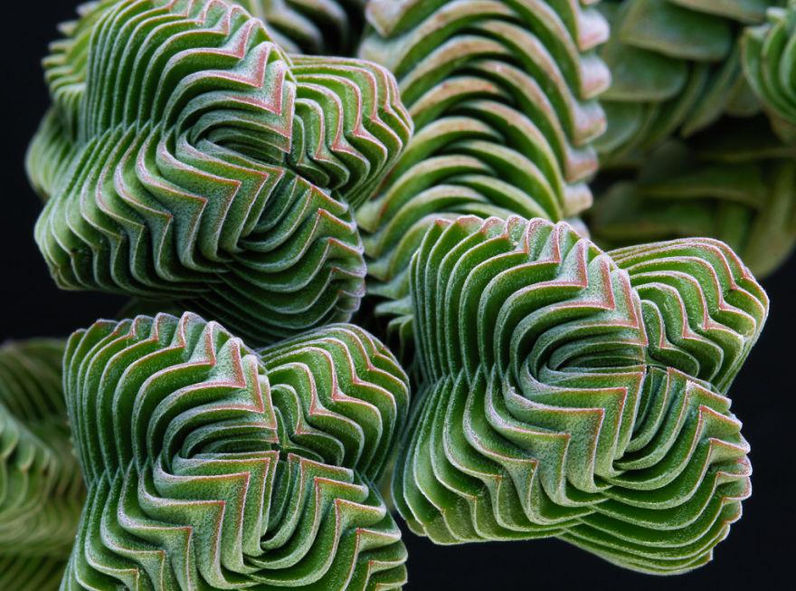 plantas_geometricas_4