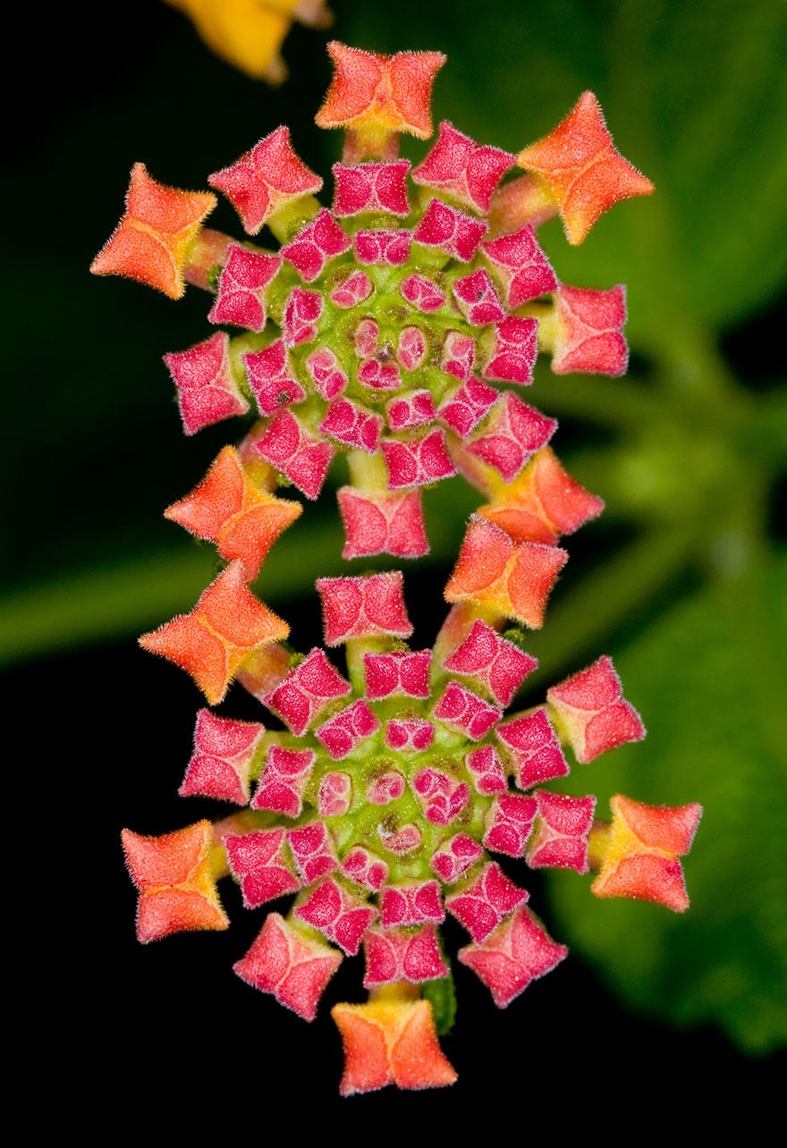 plantas_geometricas_6