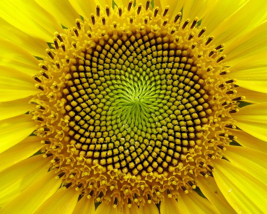 plantas_geometricas_9