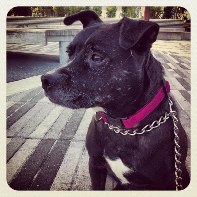 razones para adoptar perro 7