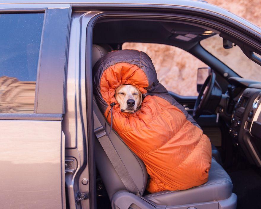 Perro y fotografo viaje 1