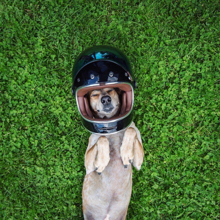 Perro y fotografo viaje 2