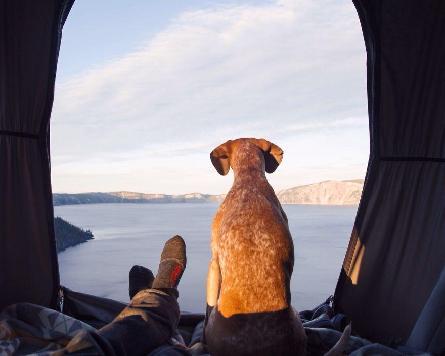 Perro y fotografo viaje 20