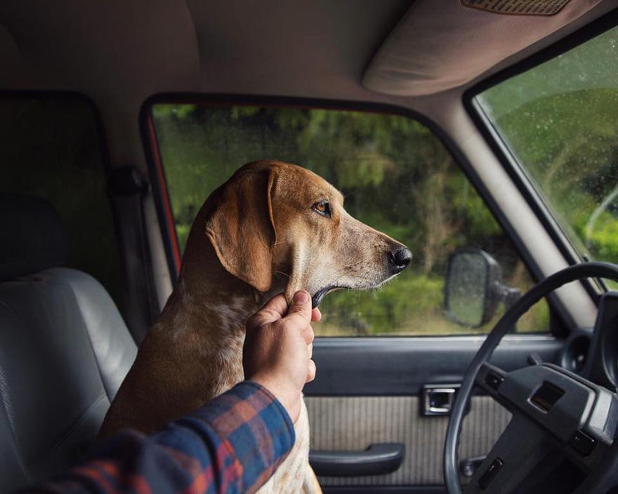 Perro y fotografo viaje 4